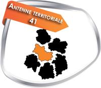 ant_41