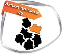 ant_45